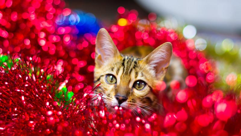 [Holiday Cat 2020]