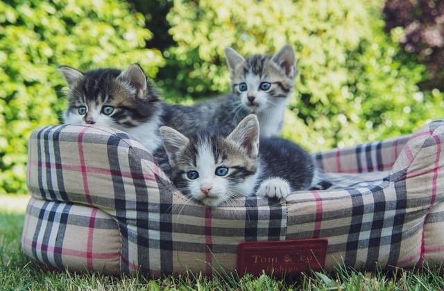 [2021 Spring Kittens]